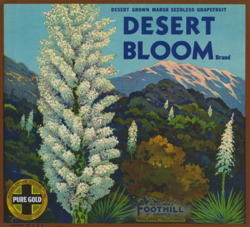Fruit crate label shows desert plants in bloom