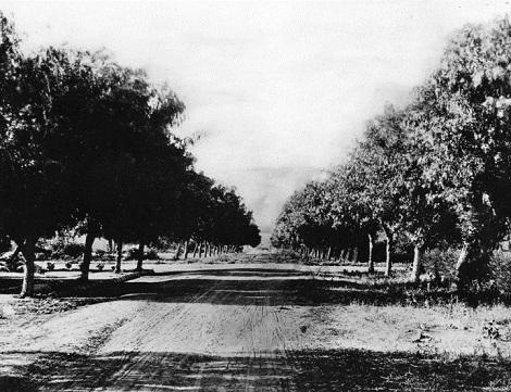 Wilcox Avenue in 1901