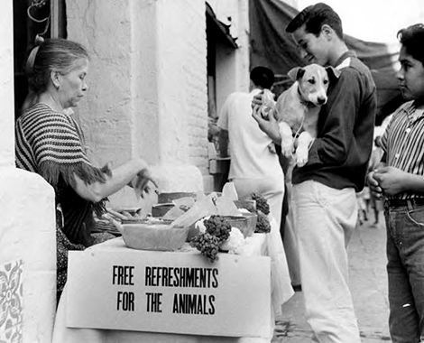 Free Refreshments for the Animals