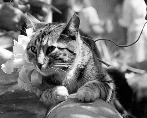 cat from El Pueblo Monument Photo Collection