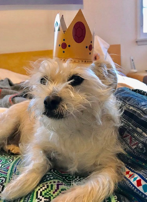 Doggy Judge Judy in a funny crown