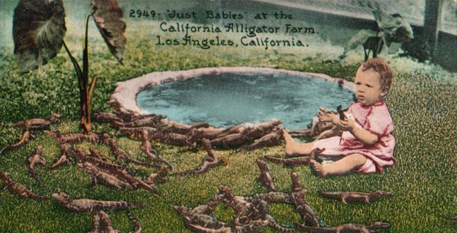 Color postcard of California Alligator Farm, in Los Angeles [ca.1911]