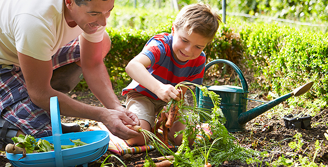 Father and son harvesting their vegetables from their garden.