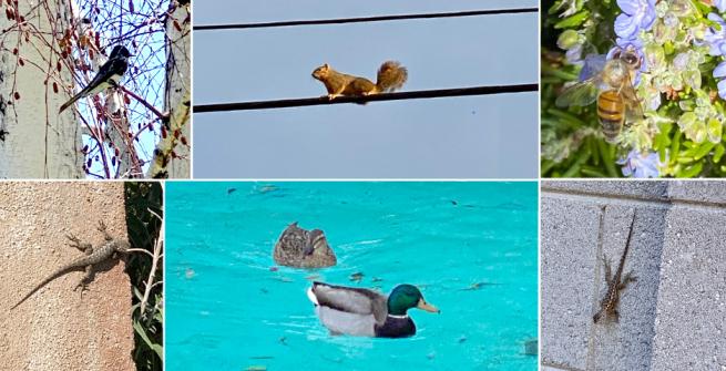 Collage of birds, reptiles and animals around the neighborhood