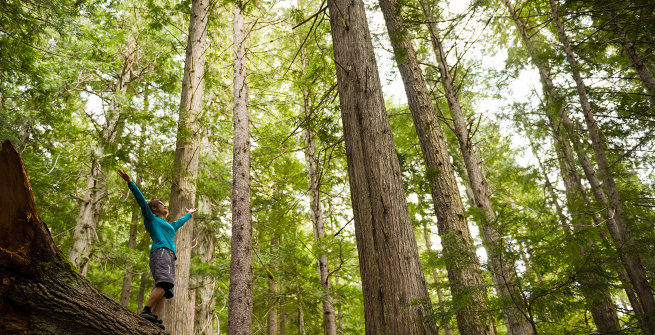 Happy person with arms raised among the trees