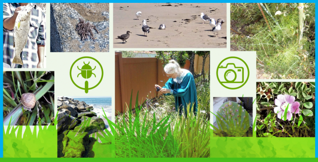 Collage of wildlife observations at Temescal Gateway Park