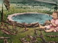 Color postcard of California Alligator Farm, in Los Angeles [ca.1911]