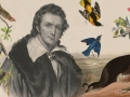 Portrait of John James Audubon and a collage of his bird illustrations
