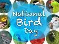 a graphic with multiple circular photographs of birds, with the overlayed text, National Bird Day