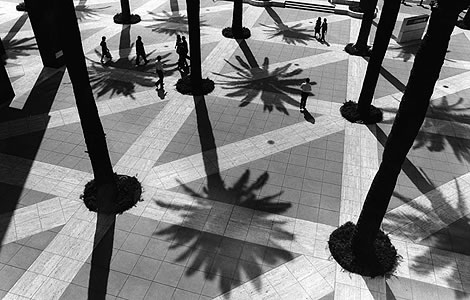 Palm trees in the Citibank plaza courtyard at 5th. and Flower Streets. March 21, 2000.